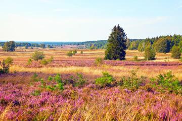 Naturlandschaft Lüneburger Heide, HDR