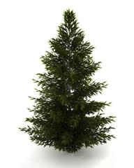 Green christmas fir tree
