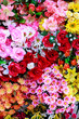 Bed of beautiful different Flowers (at local market)