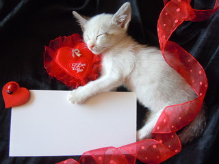 kitten's valentine's card