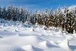 wintry scenery with snowy glade and forest