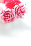 carnation and ribbon on white background