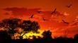 Fototapeten,afrikanisch,tier,hintergrund,vögel