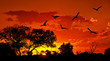 Fototapete Hintergrund - Vögel - Wald