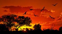 "Постер, картина, фотообои ""Landscape of Africa with warm sunset"""