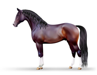 Vector beautiful dark bay horse