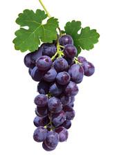 Wine Cluster