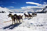 Dog sledding in Alaska - 37397719