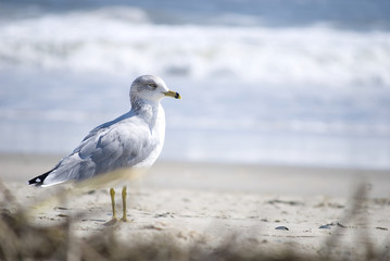 Bird in Outer Banks