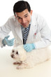 Vet treating a sick animal