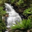 Fototapeten,wasserfall,regenwald,farnkraut,lush