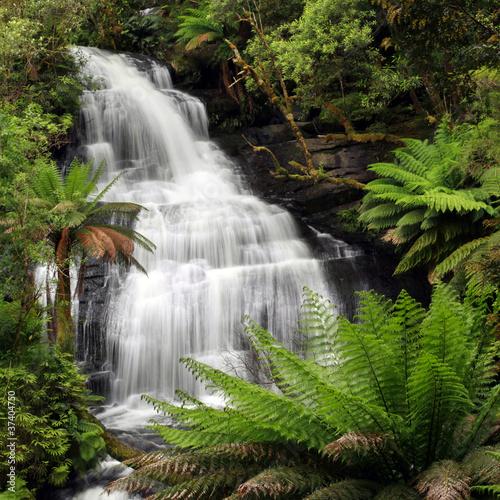 Fototapeten,wasserfall,rainforest,laub,viereck