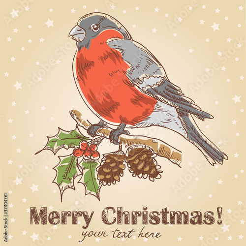 Christmas hand drawn postcard with bullfinch