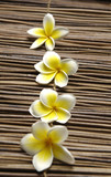 Set of a line frangipani flower on mat