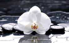 zen spa ou encore la vie sur fond noir avec orchidée blanche