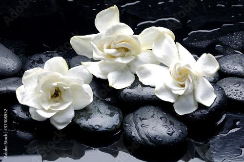 Wet Zen Spa Kamienie zkwiatu gardenii