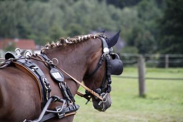 Pferd vor einer Kutsche mit Scheuklappen