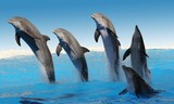 Fototapete Meeressäuger - Flipper - Meeressäuger