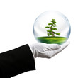 holding tree bubble