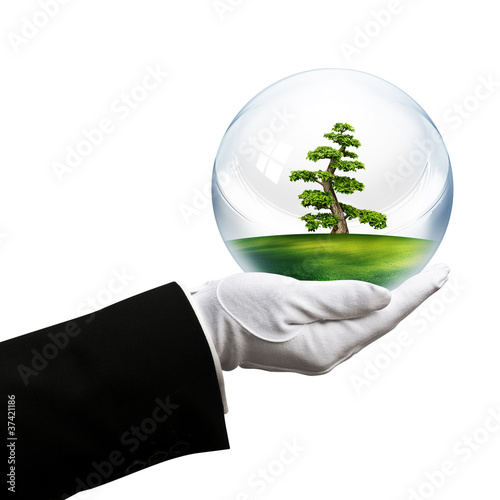 holding tree bubble