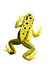colorful yellow frog on white background. Isolated
