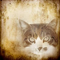 ritratto di gatto vintage