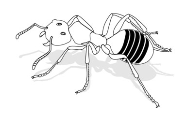 bug - forest ant, vector