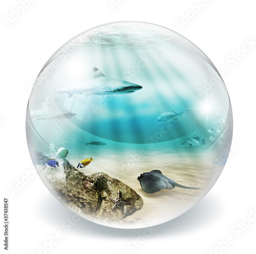 fish in bubble