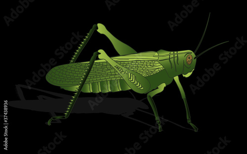 bug - cricket isolated on black background , vector