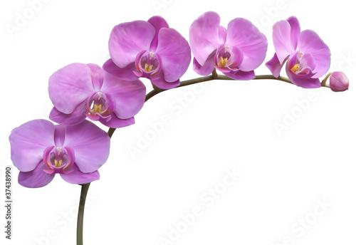 Fototapeten,blume,orchidee,hintergrund,vektor