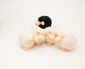 the black sheep of the family