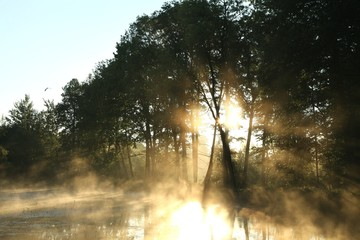 Deciduous forest surrounded by mist floating over the water
