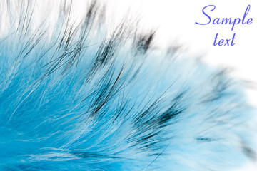 blue fluffy fur