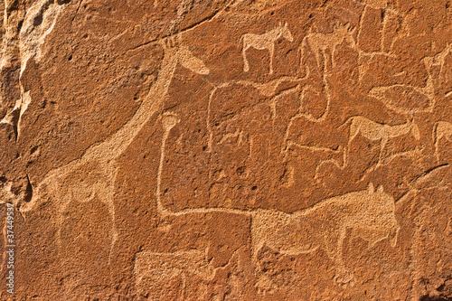 Fototapeten,löwe,namibia,afrika,antilope