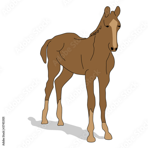 animal - hourse, vector