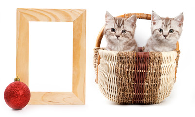 Two kittens in basker for present