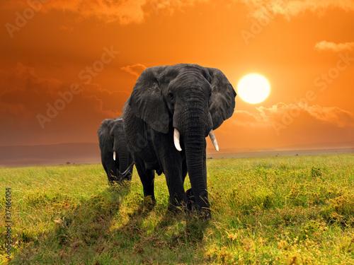 Plexiglas Olifant African elephants
