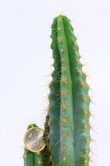 Cactus e Euro