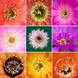 Collage Blüten von Kakteen