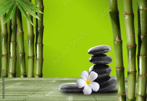 Młody, zielony bambus w boke tle