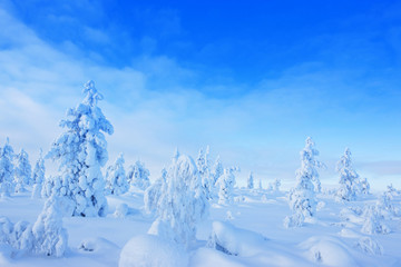 Winter in the finland