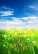 bubbles in meadow