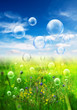 meadow bubbles