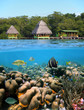 Cabins and corals