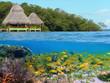 Snorkeling in tropical sea