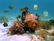 Underwater colorful marine life with marine worms, sponges and tropical fish in the Caribbean sea - 37495362
