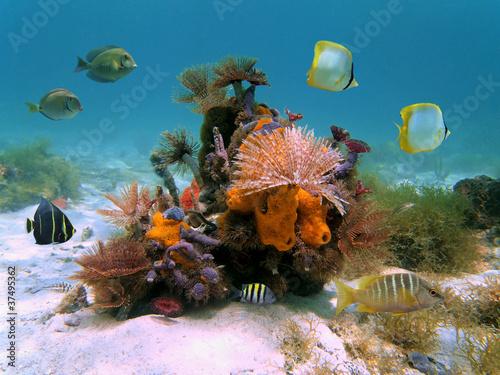 Papiers peints Recifs coralliens Tubeworms and sponges