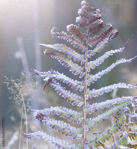 hoar frost on the plants - 37502121