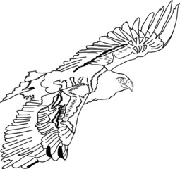Black silhouette swooping Tattoo egle. Vector