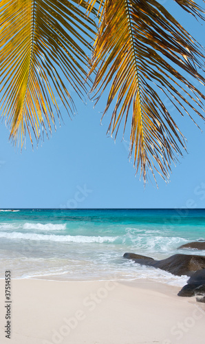 plage des Seychelloise sous les cocotiers